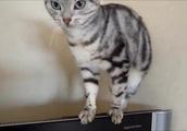 あめちゃんだって猫である! ふざけてたって抜群のバランス感覚で踏ん張る!