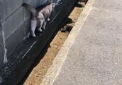 さすが猫!賢く日陰を通ってます!(笑)