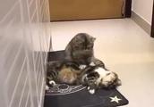 猫のマッサージ店 可愛い動物シリーズ
