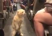二足歩行で威嚇する猫