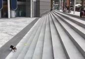 【おもしろ】階段を利用して一人でボール遊びをする犬が可愛すぎるw