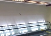 通勤中の駅で、めちゃくちゃおもしろい鳥を見つけた