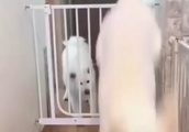 【動物系面白動画】柵の意味が・・・(笑)