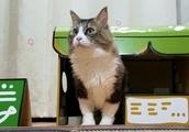 猫カフェにボス猫が来店 何やら店内からバキバキと凄い音が