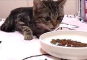 ネコがエサを食べる音が凄く、、、