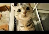母ちゃんがいればきっと大丈夫! ...確信から安心に変わる猫 ~毎週やってくるしつこい台風!-Cat Hate Typhoon