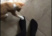 猫の不思議。台所に行こうと立ち上がった瞬間、2匹の子猫が足元でごにょごにょ