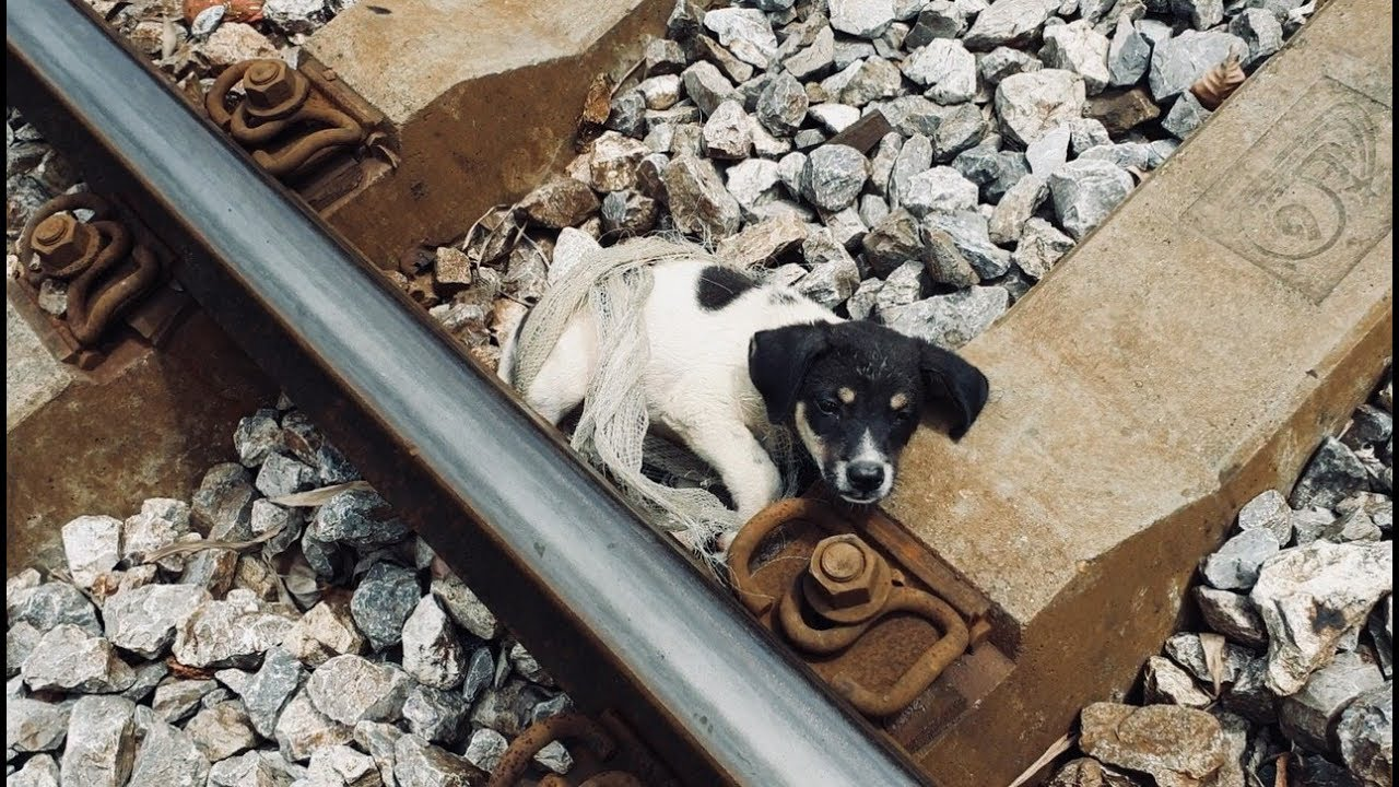 Rescue the abandoned dog on the railroad track... The rescue takes many viewers' tears