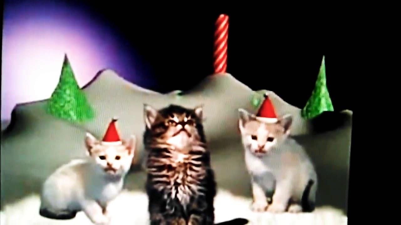 A cute cat Christmas video